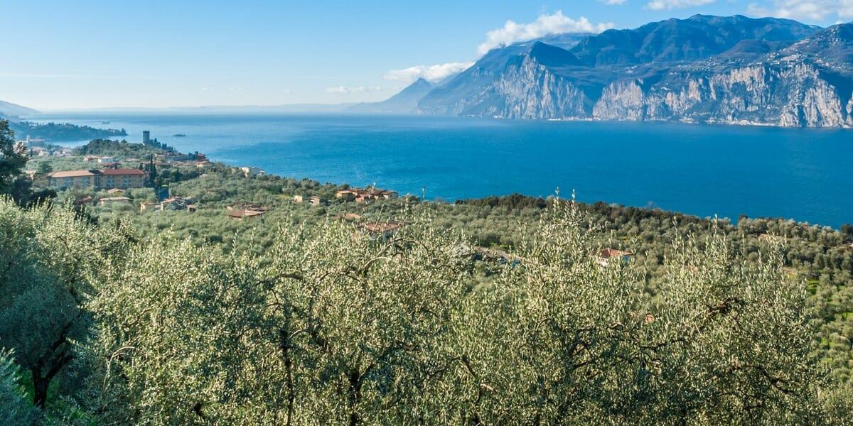 malcesine e olivi