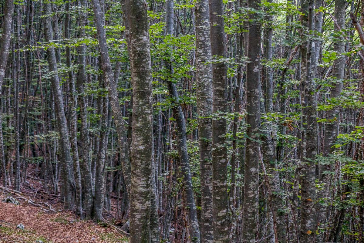 bosco sentiero numero 5