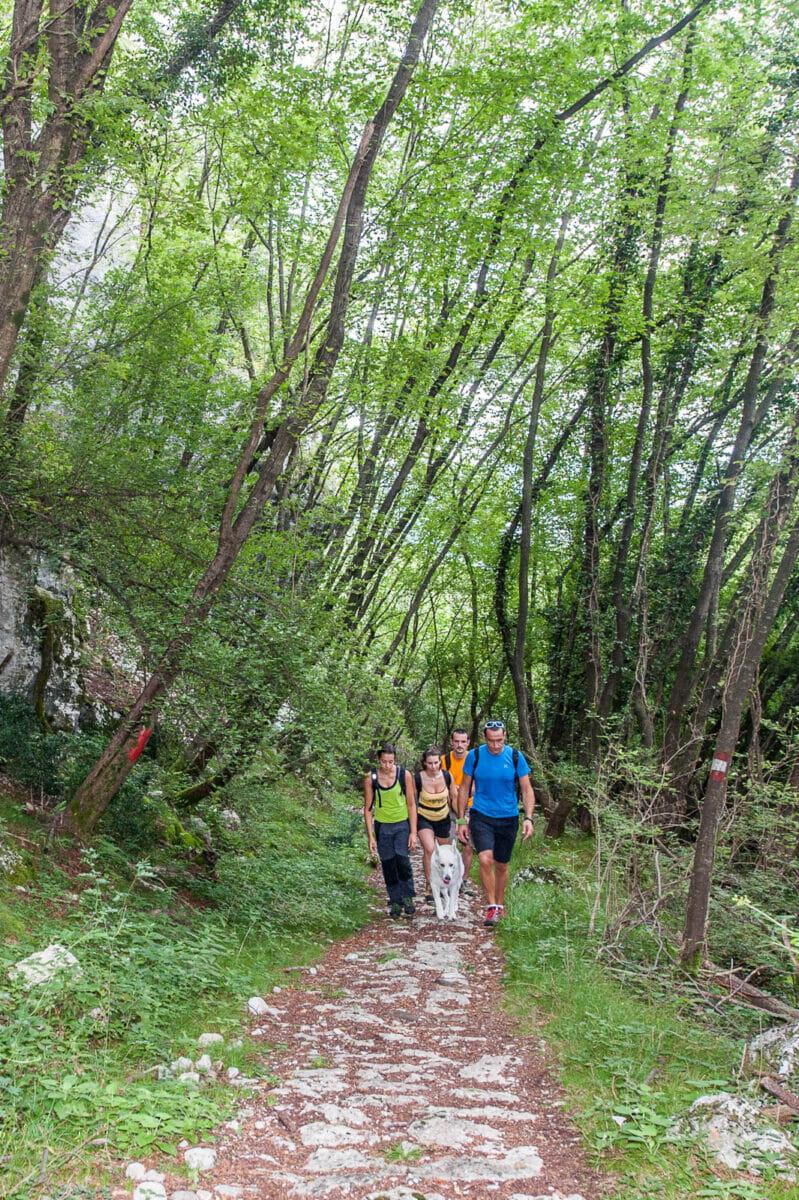 sentiero 659 nel bosco
