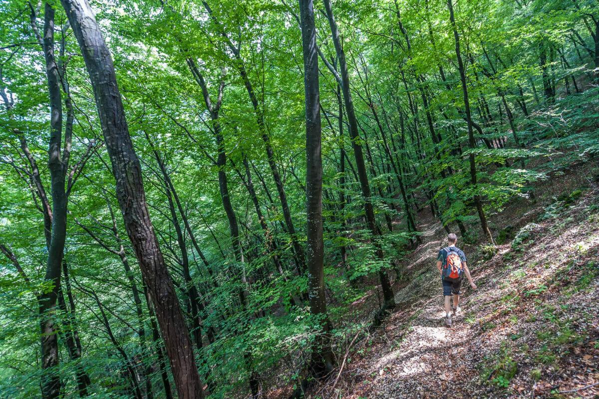 sentiero 7 nel bosco