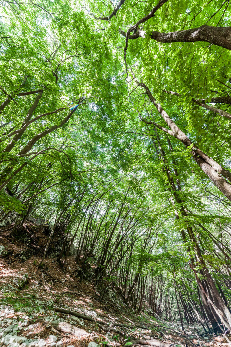 bosco in primavera