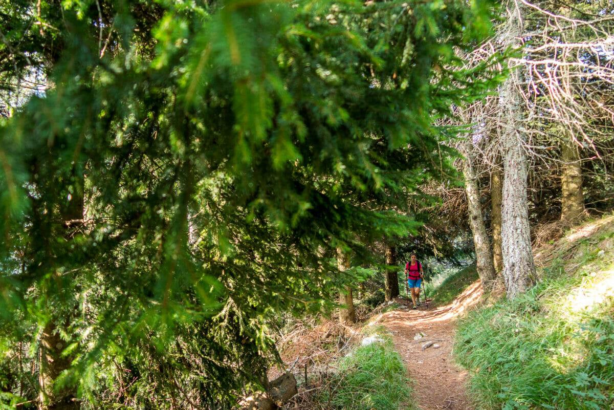 cai651 nel bosco
