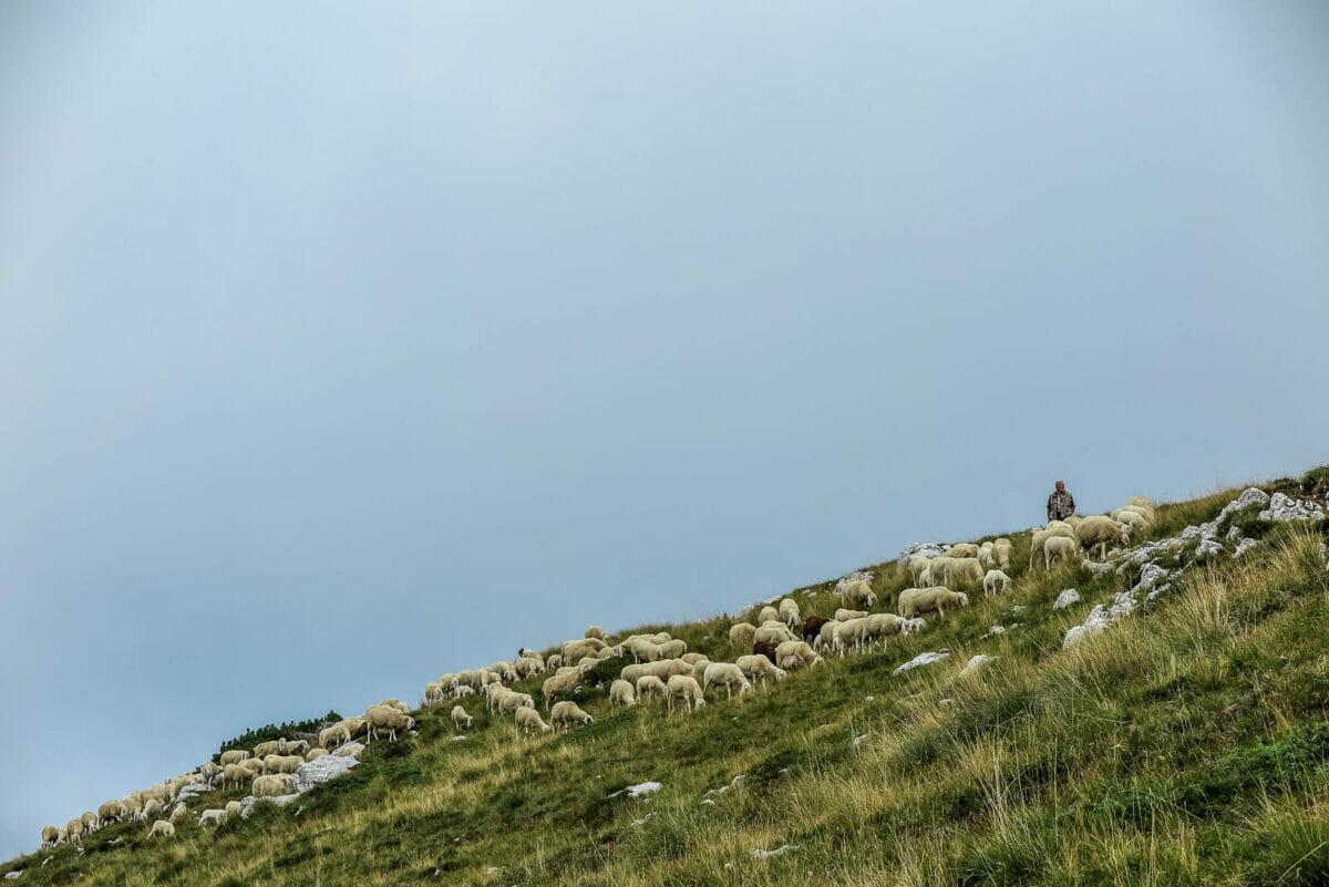 pastore sul monte altissimo