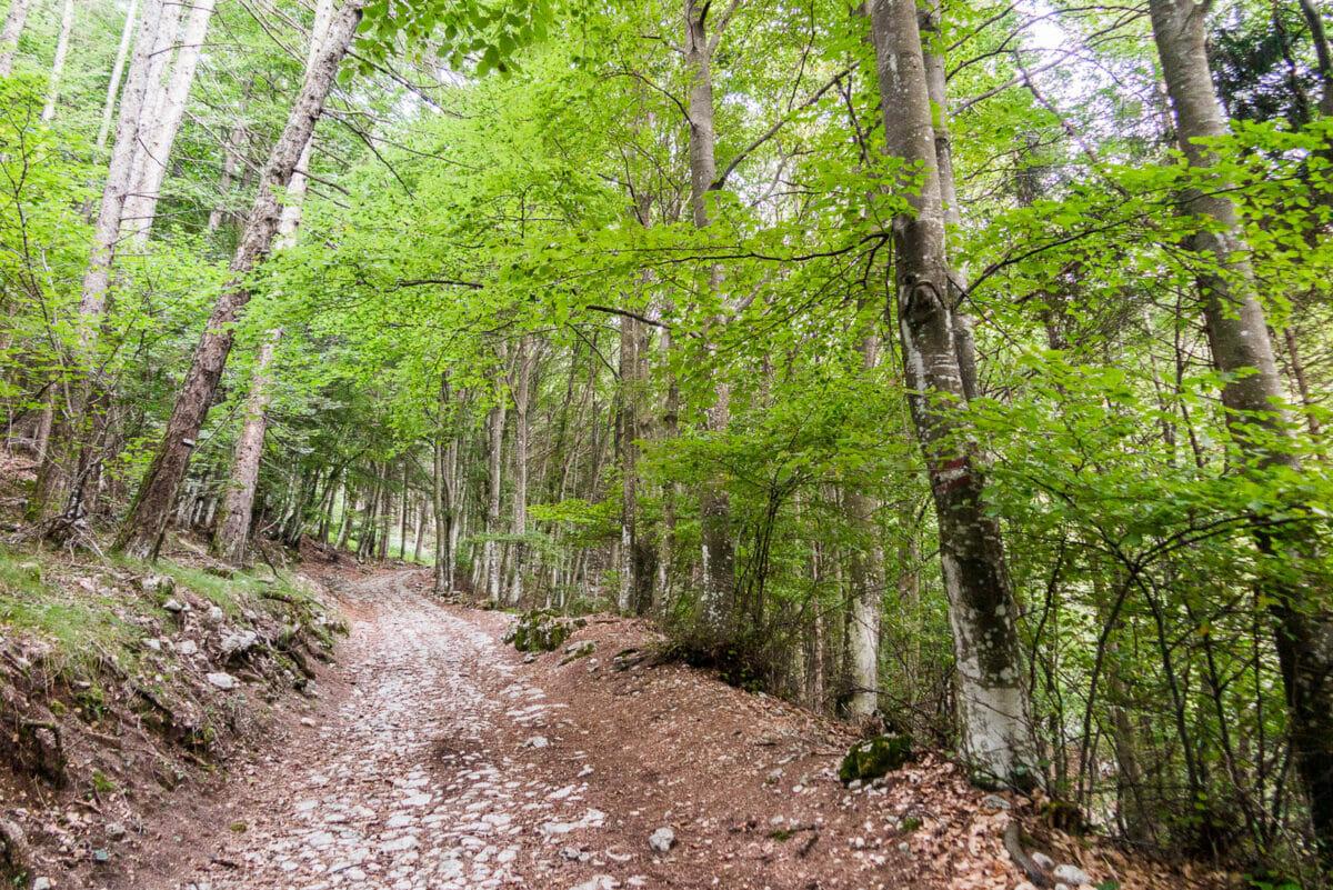 salita a piedi in riserva monte baldo