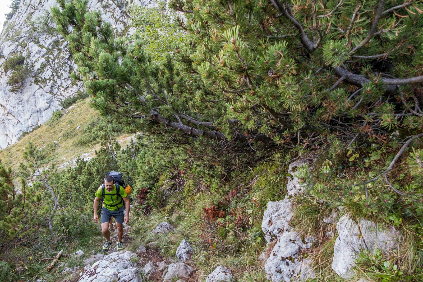 monte baldo wanderroute weg 654 wald