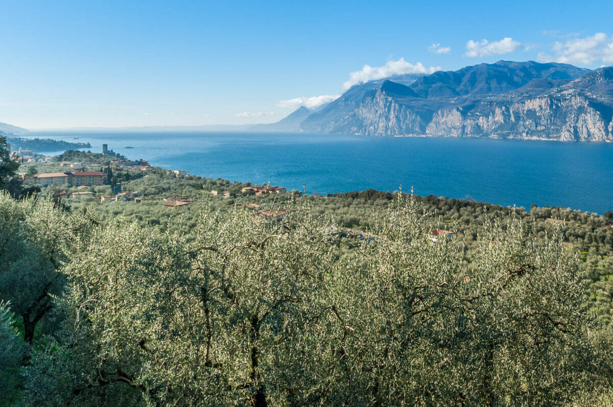 olive trees and malcesine from via panoramica