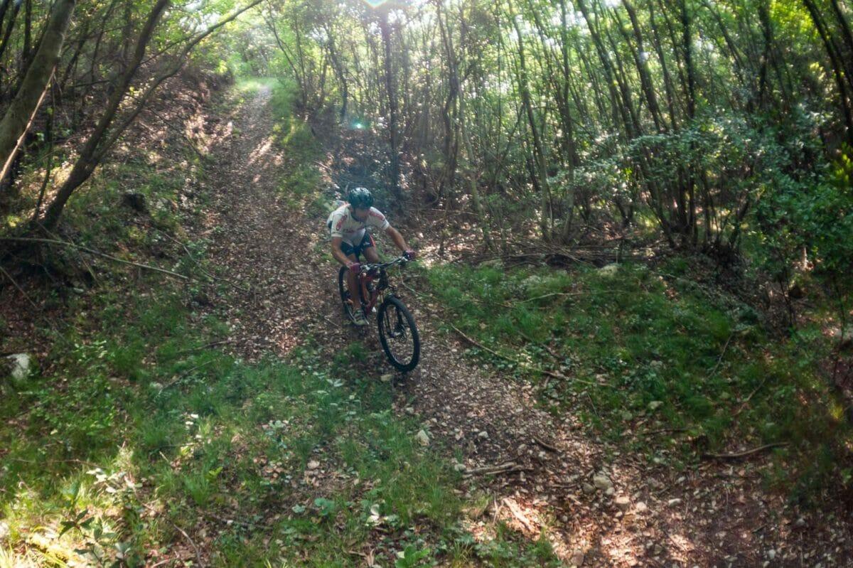 descent into the navene wood