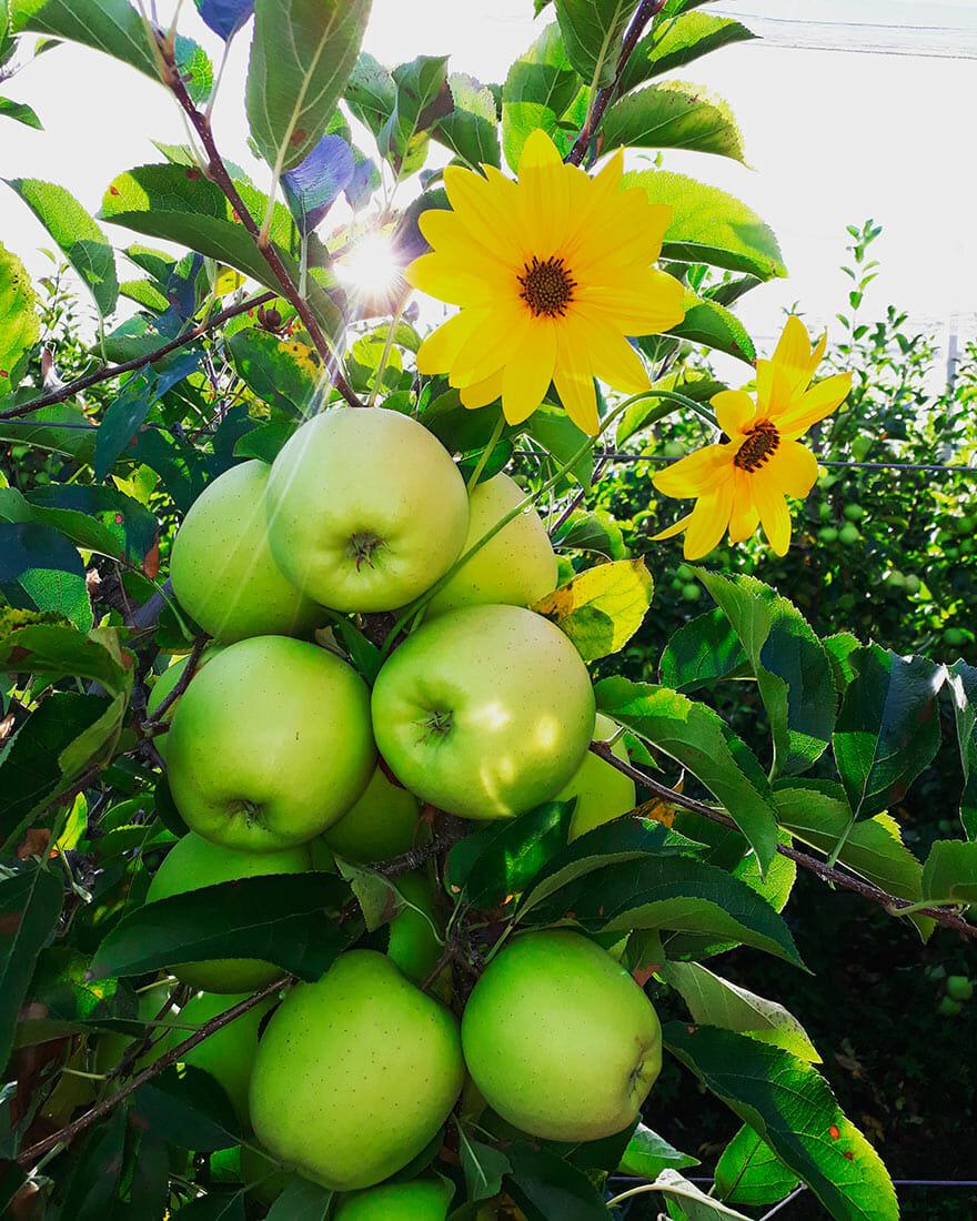 azienda agricola la quadra mele