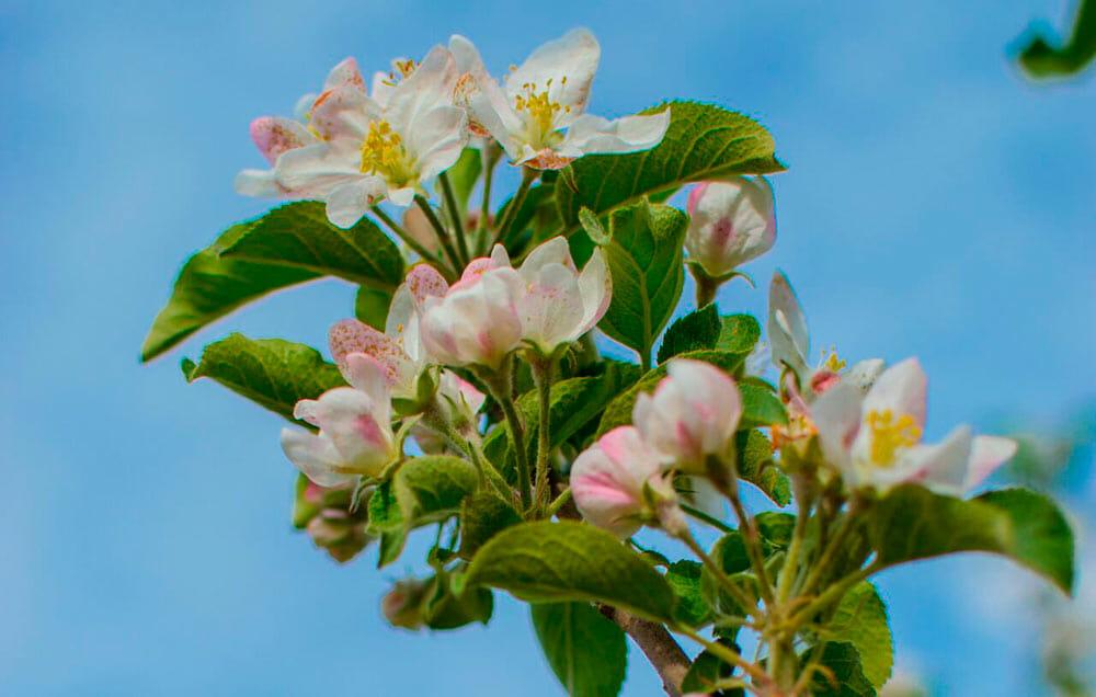 famiglia bortolotti azienda agricola la quadra fiori