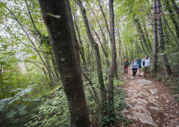 trekking sul sentiero nel bosco