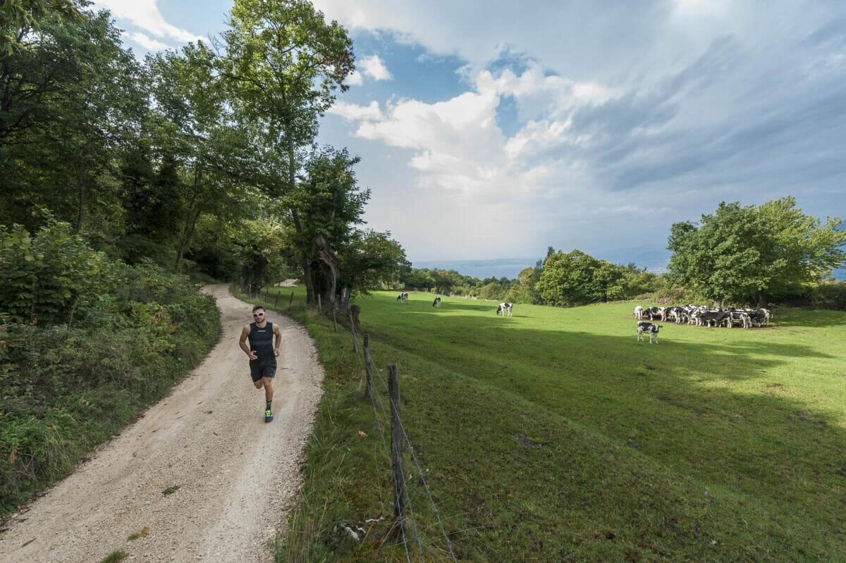 Läufer in der Nähe des Feldes mit Kühen