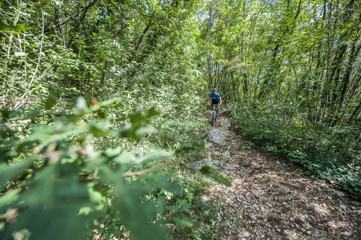 bike trail in the woods