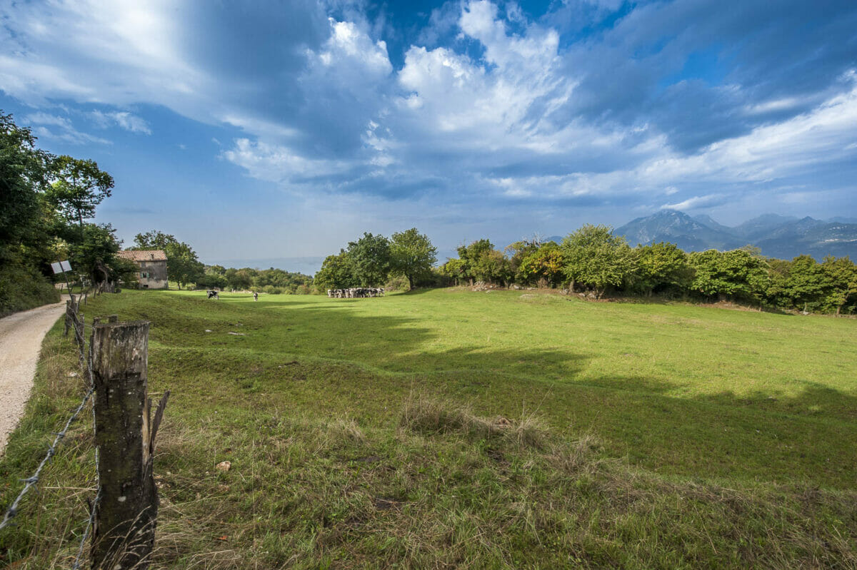 trail and meadows in san zeno di montagna