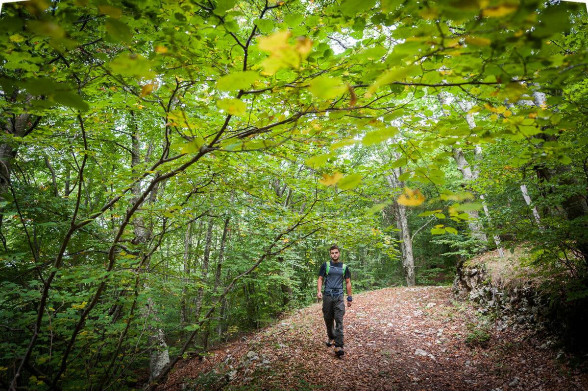 sentiero nel bosco a prada