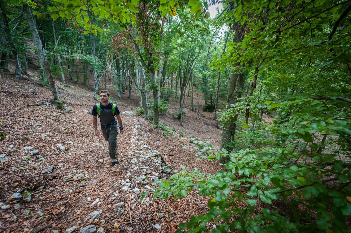 uomo fa trekking nel bosco