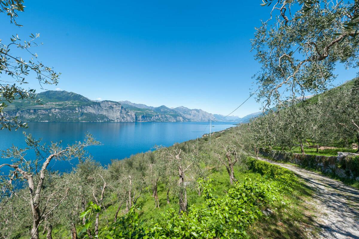 sentiero nordic walking brenzone con olivi