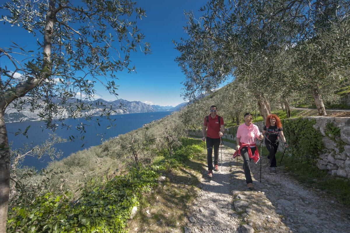 nordic walking aufstieg zwischen den olivenbäumen