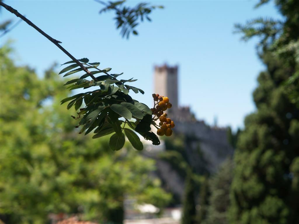 villa lara view over the castle