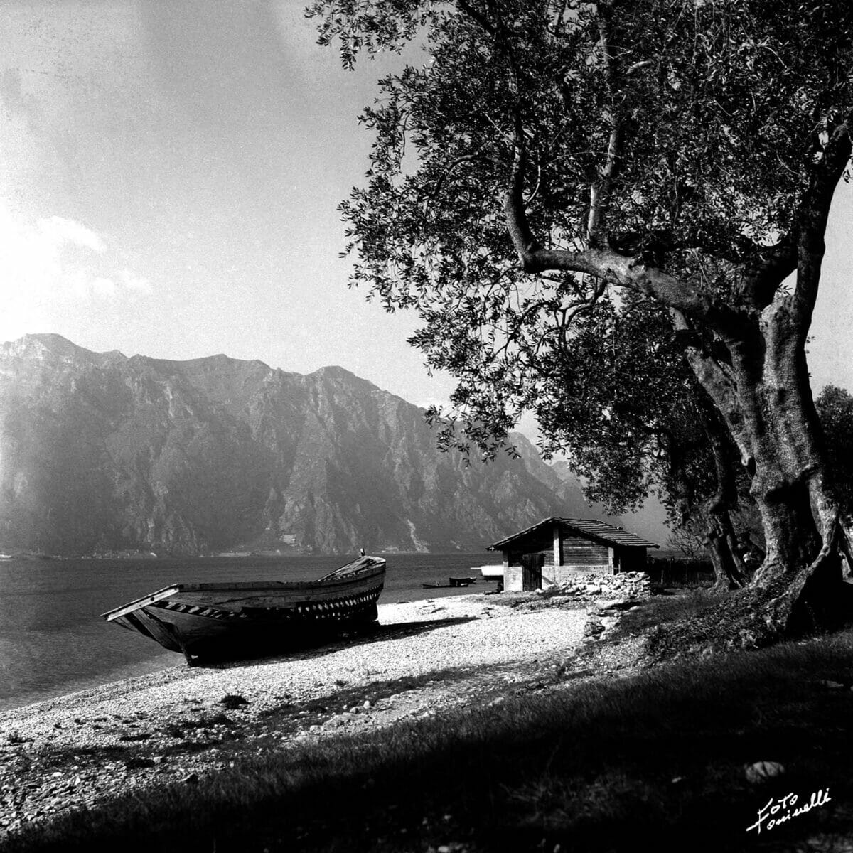 boat on the beach and olive tree